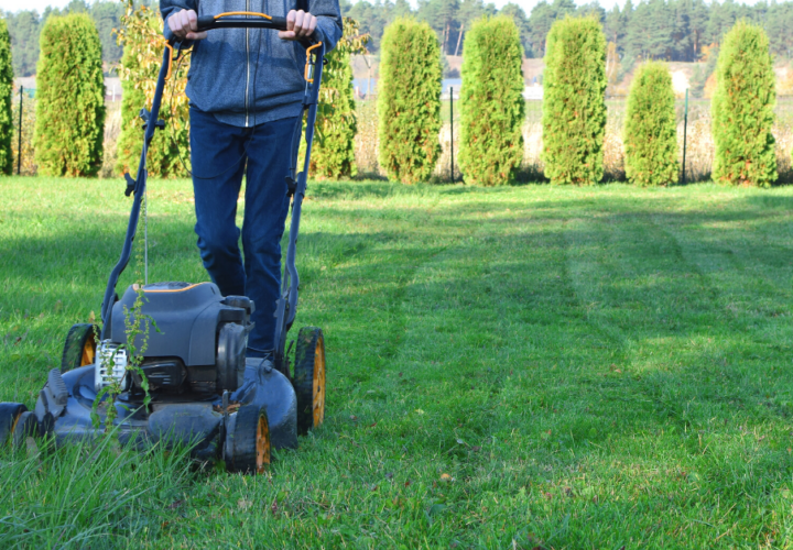 teen mowing green grass with evergreens in background
