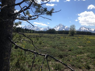 mountains-tetons-pinetree